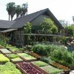 Família norte-americana produz 3 toneladas de alimentos orgânicos no próprio quintal
